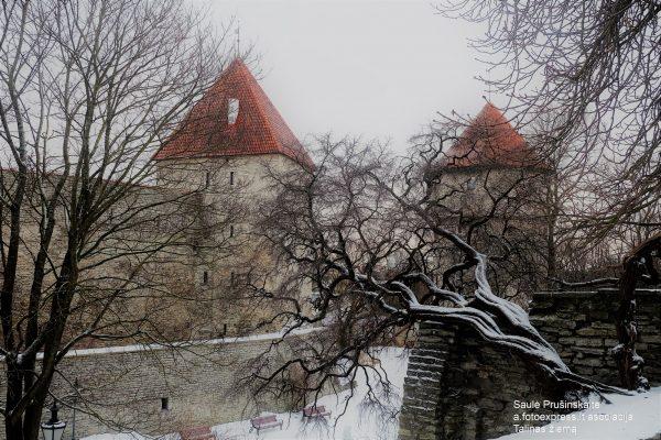 13u Estija. Talinas žiemą